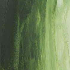 819 Sap Green