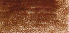 6100 Copper Beech